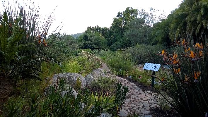 Kirstenbosch Garden of Extinction Cape Town