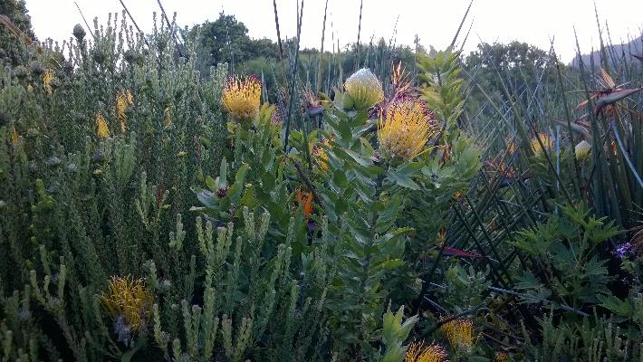 Kirstenbosch Garden of Extinction