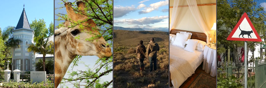 luxury accommodation cape town route 62 and little karoo