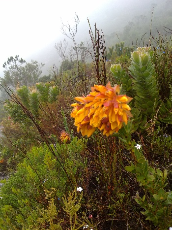 'Adapted to Perfection' – A Note About Fire-Hardy Cape Fynbos