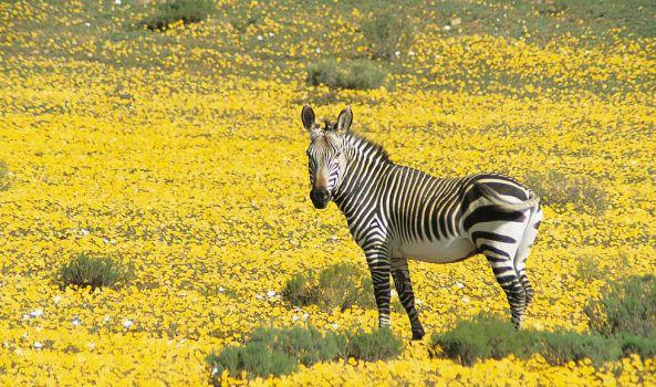 Predator-free getaways in South Africa