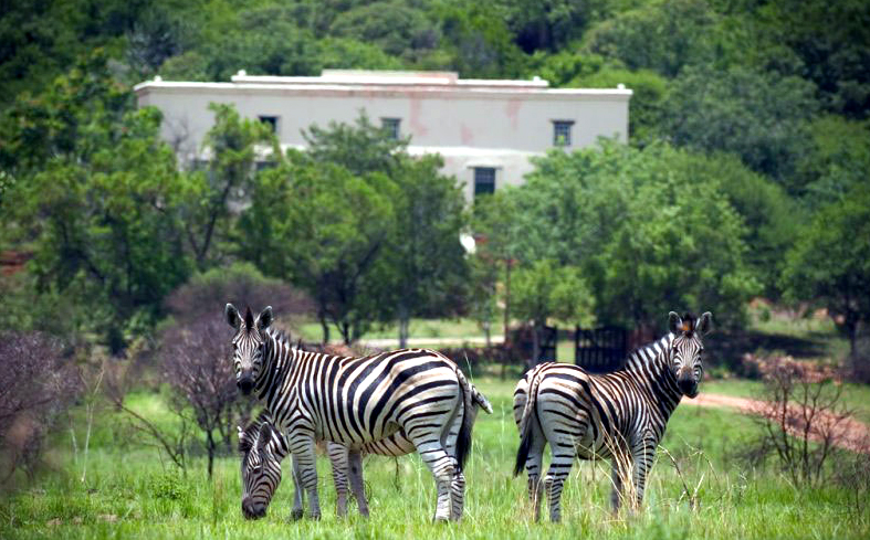 Predator-free getaways in South Africa