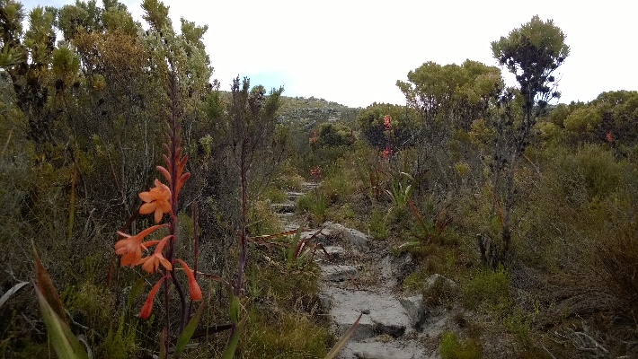 A path in Silvermine before the 2015 Cape Fire