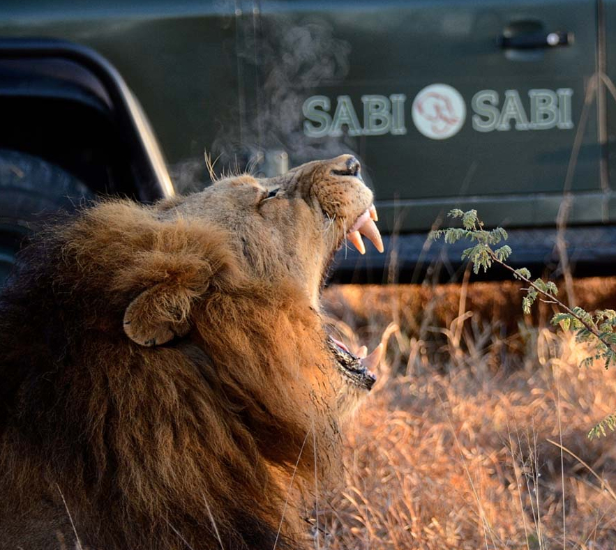 Solo Luxury Safari Travel in South Africa Where There's No Single Supplement