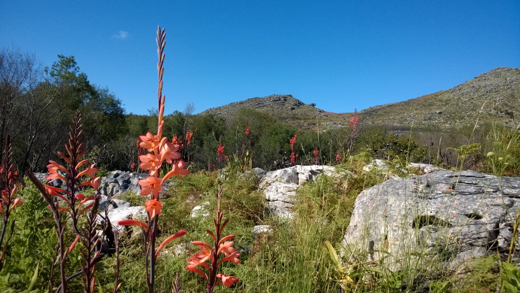 Silvermine West Re-Open December 2015