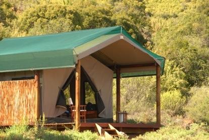tented eco safari in the cape