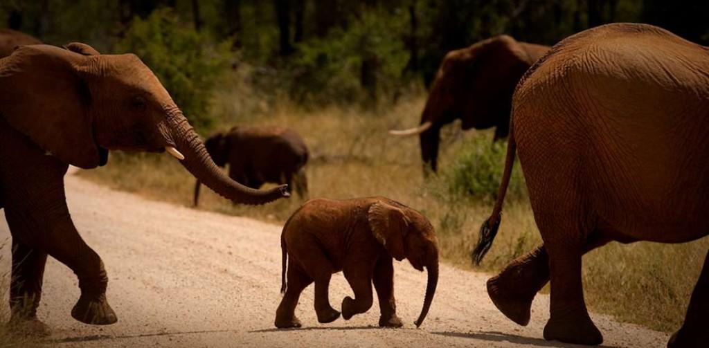 Be a Wildlife Photographer: Snap Up Wildlife Photography Skills at Jaci's Lodges