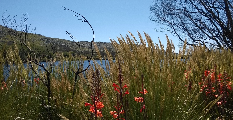 Silvermine Nature Reserve, one of the many protected areas in Cape Town