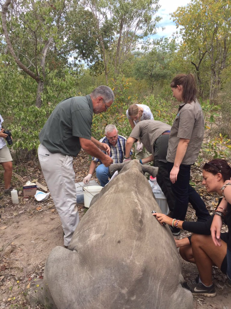 Experiential Rhino Conservation Safari at Camp Jabulani: Conservation Meets Luxury