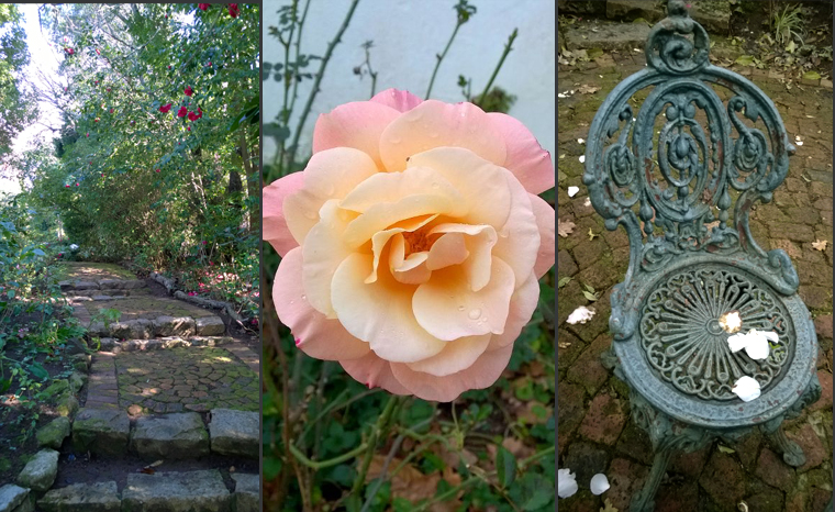 Where Life's a Bed of Roses … The Heavenly Gardens at the Cellars-Hohenort in Cape Town