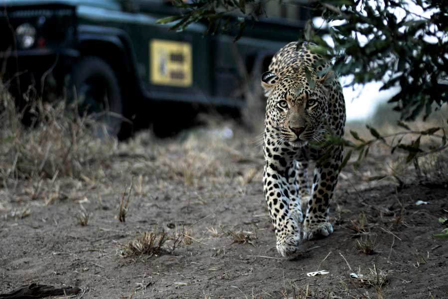 Clickety Click: Awesome Photographic Safaris in South Africa