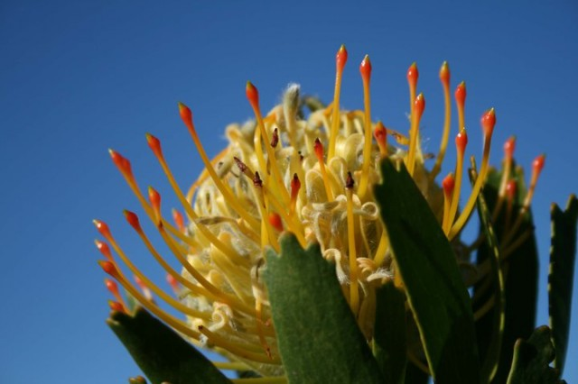 Fynbos holiday destinations in the Western Cape and Garden Route