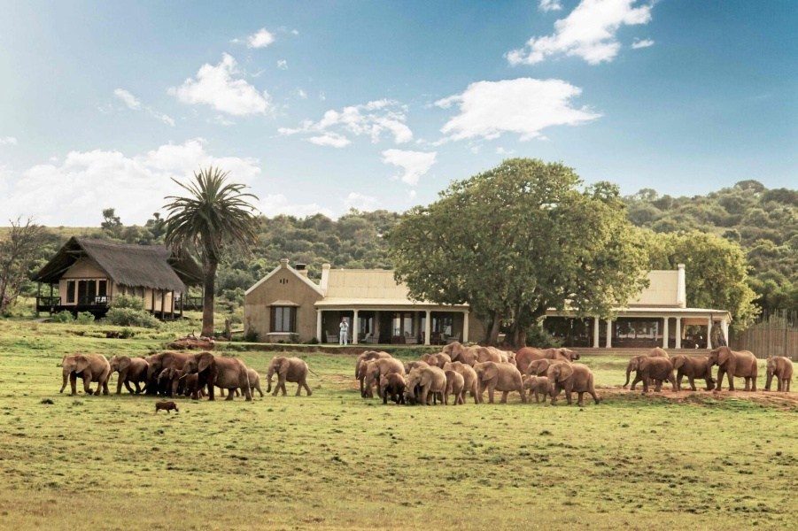 Addo Elephant Park: Experience the Elephants of Addo From A Luxury Lodge