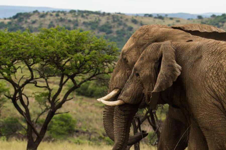 7 Stunning KwaZulu-Natal Safaris