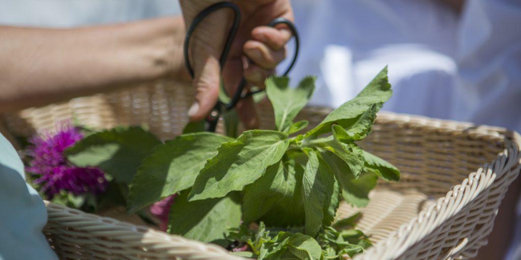 Healing tea ritual garden activities at babylonstoren cape winelands