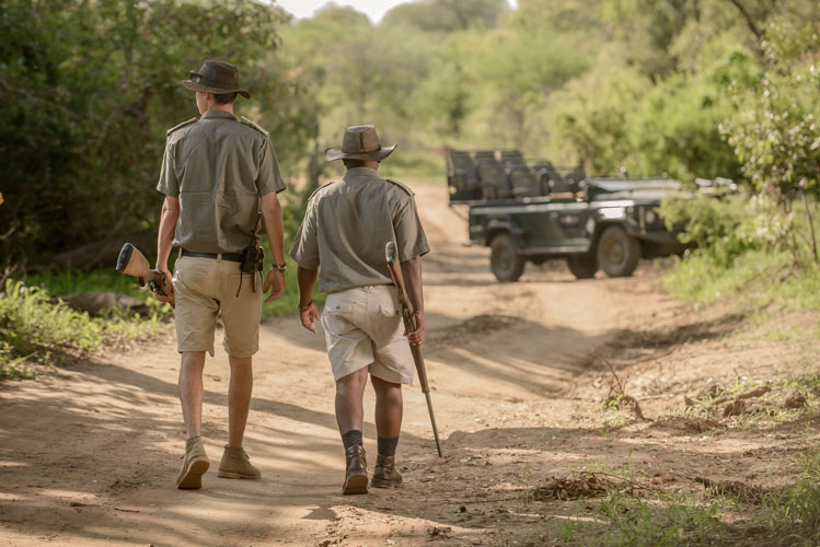 ecks Safari Lodge luxury safari accommodation and wildlife viewing Greater Kruger National Park South Africa