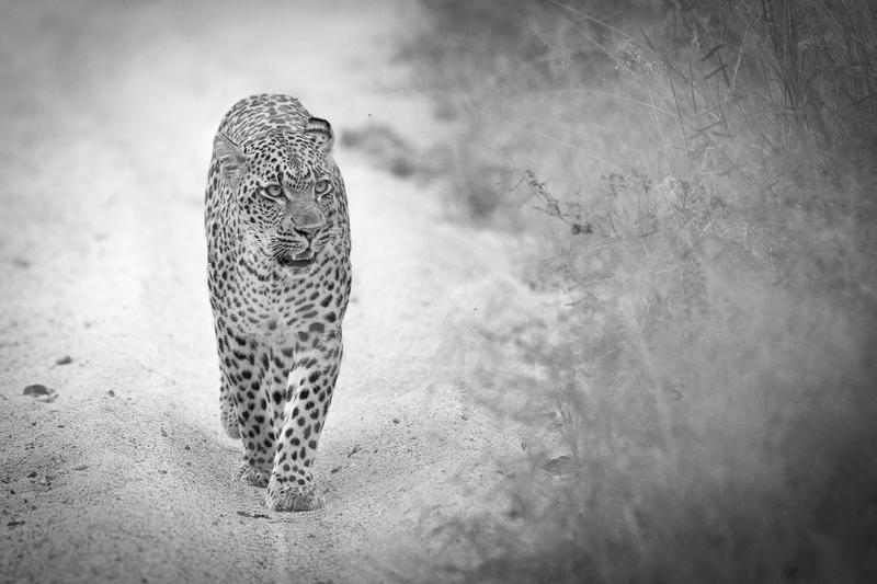 luxury highend safaris South Africa
