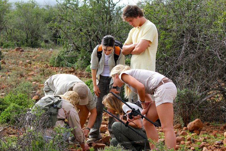 participation in conservation at luxury safari lodges experiential safari holidays volunteering