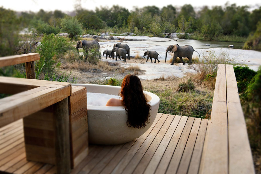 reasons to visit South Africa londolozi private game reserve wildlife big five