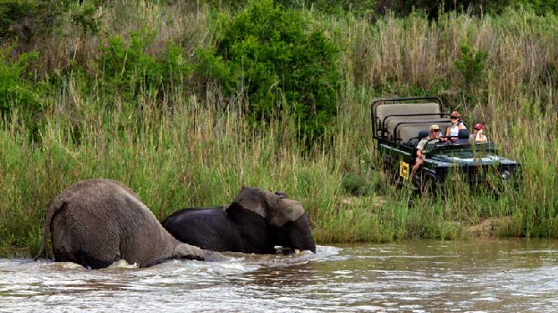 Lessons From the Bush: How To Have an Awesome Safari in South Africa
