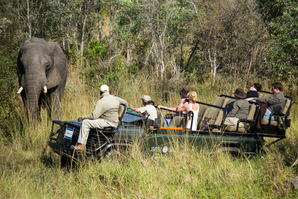 Safaris South Africa: What to Know and How to Book
