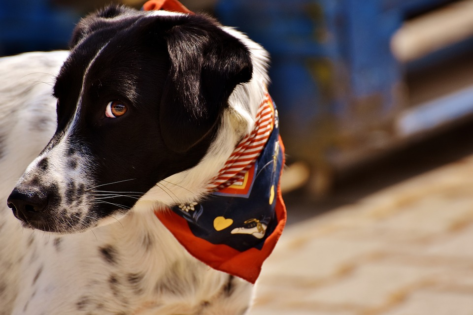 Pet-Friendly Holiday Accommodation in the Western Cape
