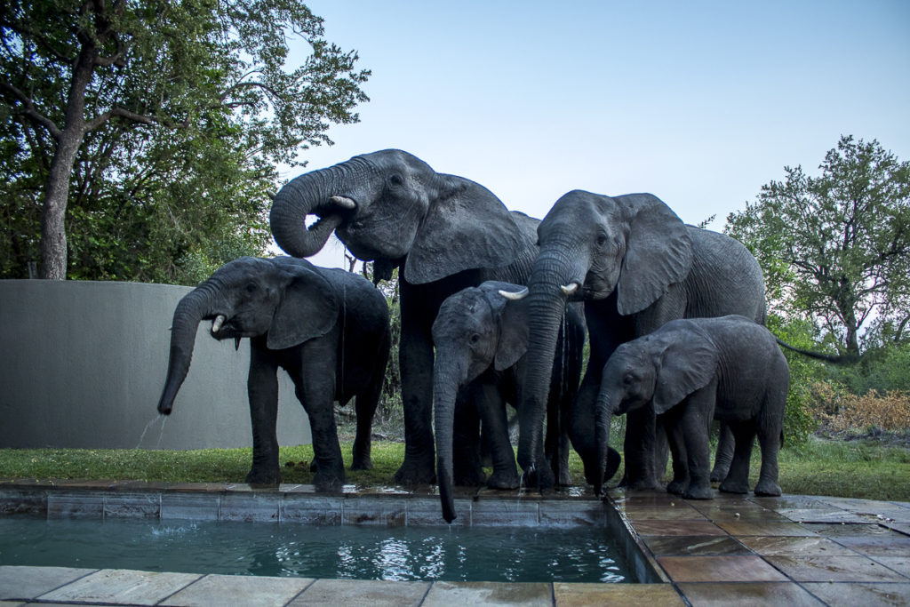 luxury safari experiences in South Africa