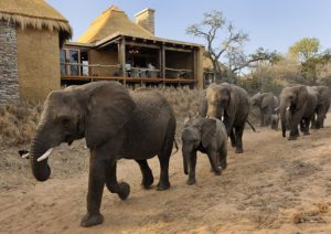 luxury family safari villas South Africa