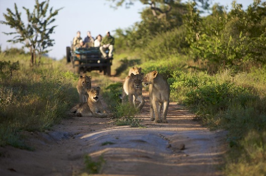 Reasons to visit South Africa wilderness areas safaris wildlife big five