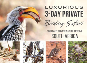 luxury birding safari in Timbavati South Africa