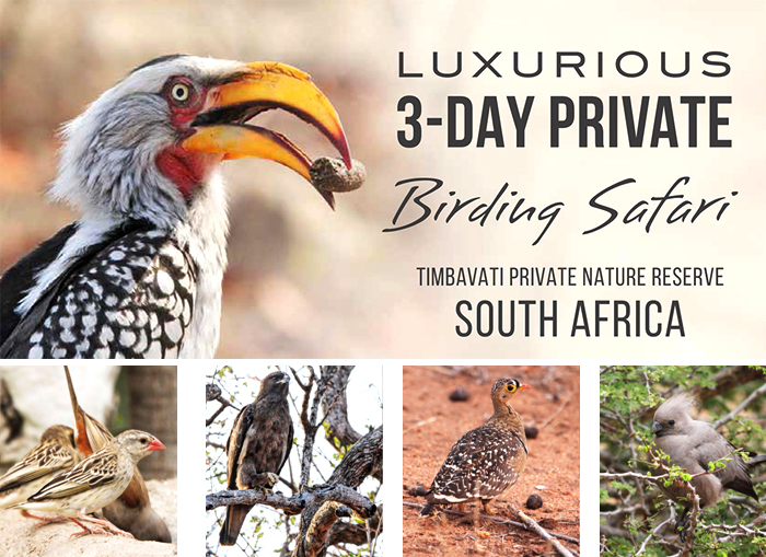Luxurious 3-Day Birding Safari in Timbavati Private Nature Reserve South Africa