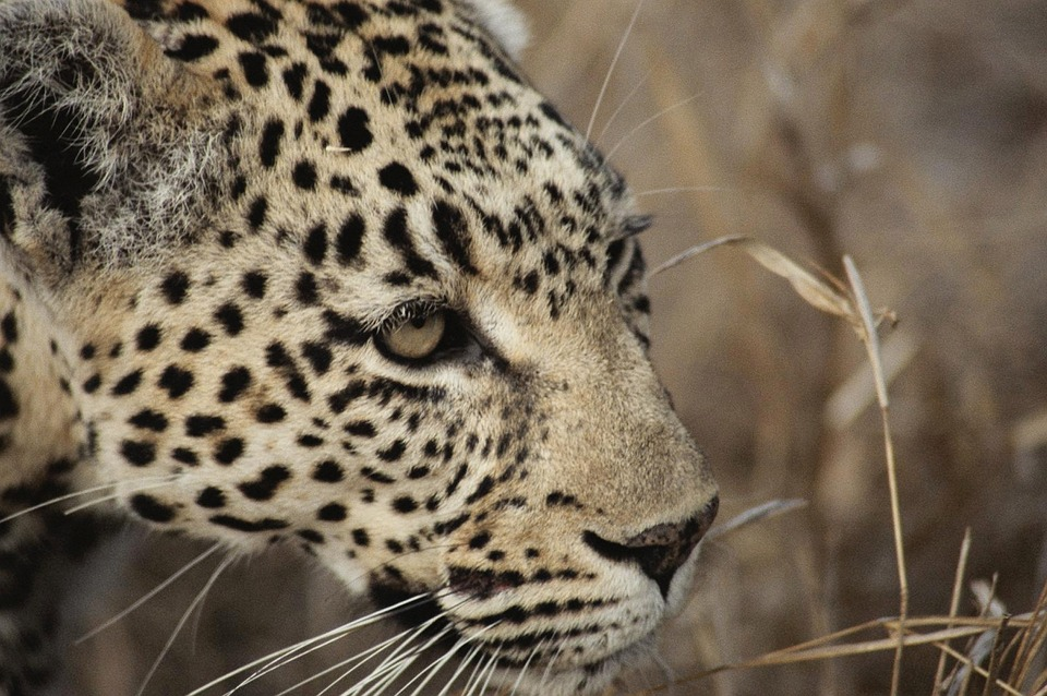 Reasons to visit South Africa wildlife big five