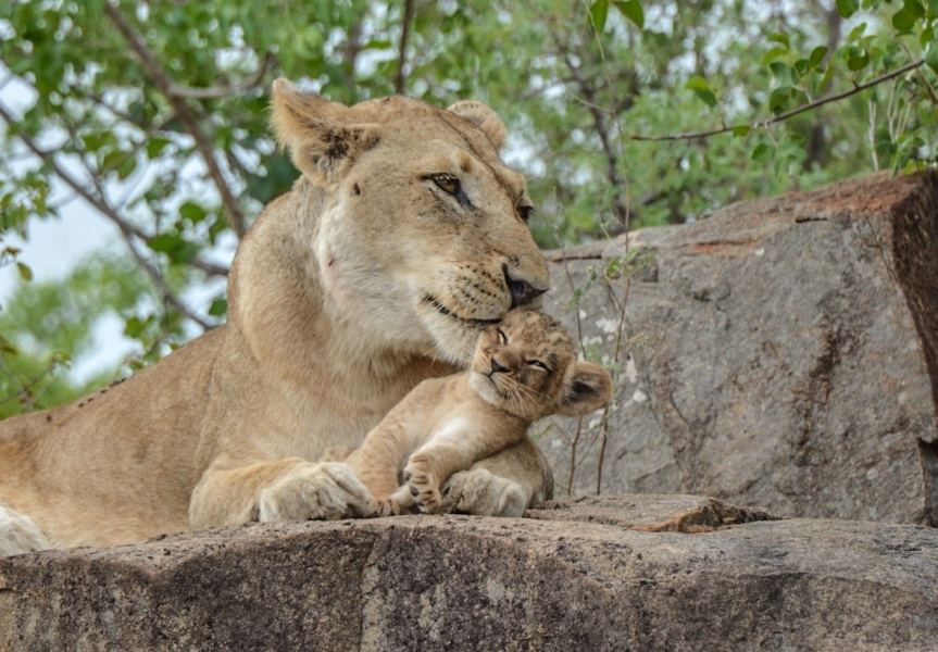 48 Hours in Sabi Sands: Your South African Safari Holiday in a Top Private Game Reserve