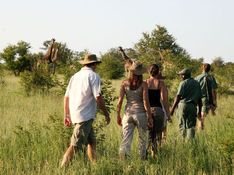 walking safari and wilderness sleepout kruger national park south africa