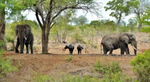 wildlife in kruger national park south africa