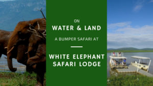 land and water safari combination