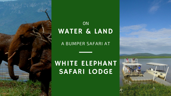 Wildlife Seen from the Water and from the Land: Safari of Variety and Value at White Elephant Safari Lodge, Pongola