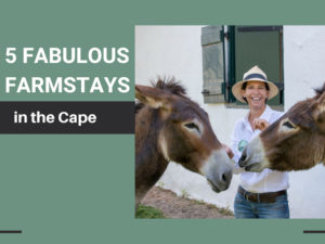 farm stays western cape