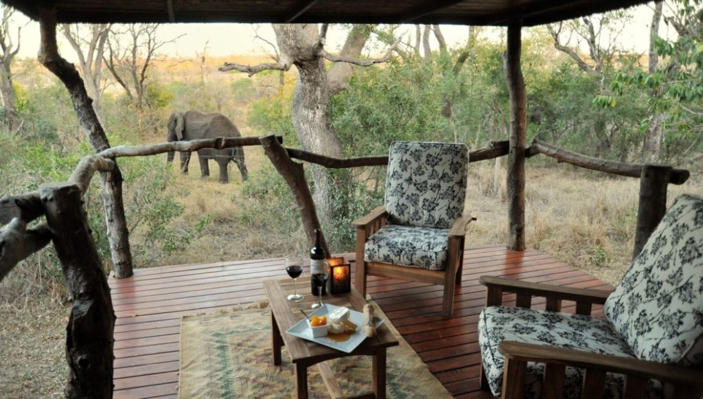 top wildlife safari experiences in south africa