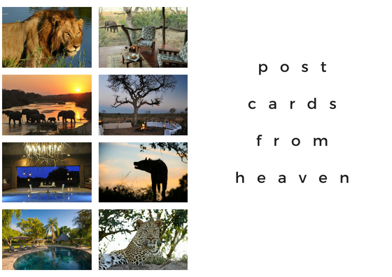 Postcards From Heaven: 4 Fabulous Luxury Safaris in South Africa