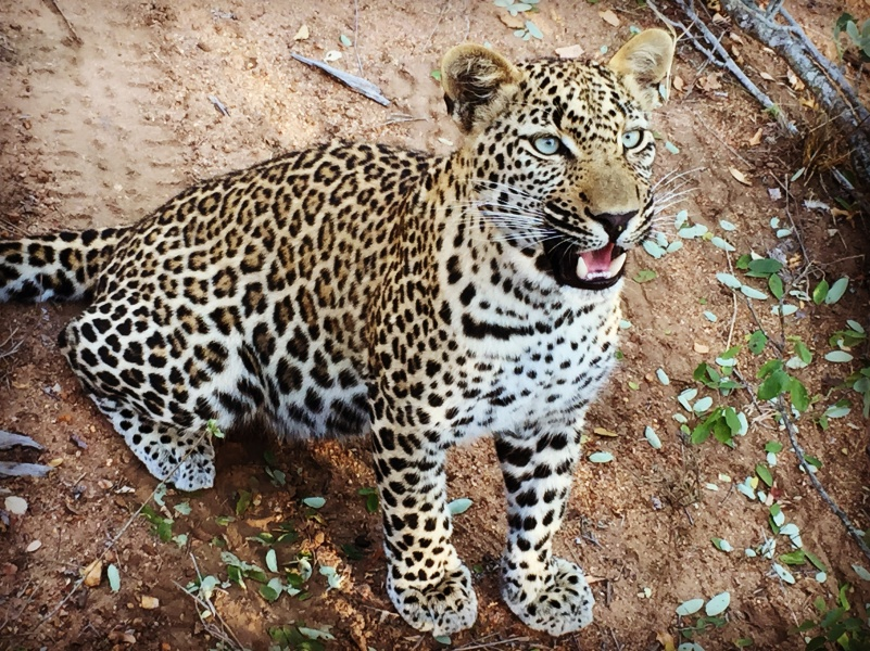 thornybusg game reserve big five wildlife safari south africa