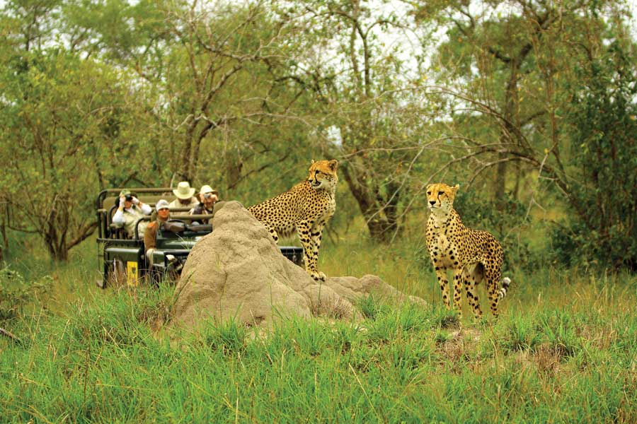 Tips for First-Time Safari Guests in South Africa