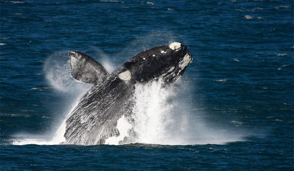 Top Whale-Watching Getaways in Western Cape: Where to Grab One This Season