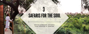 safaris for the soul south africa