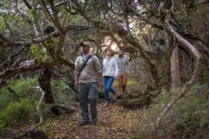 luxury getaways for walkers in western cape