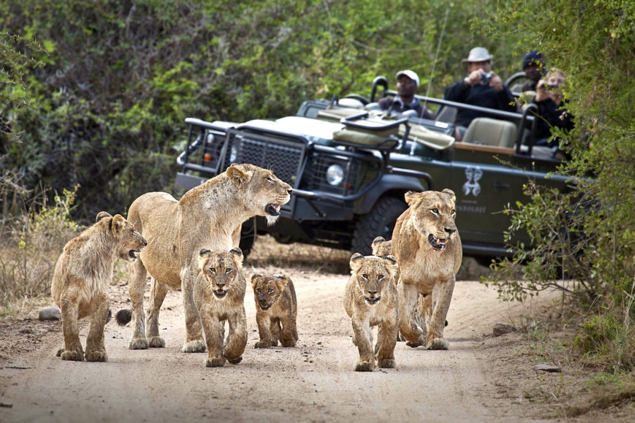 tips for safaris in south africa