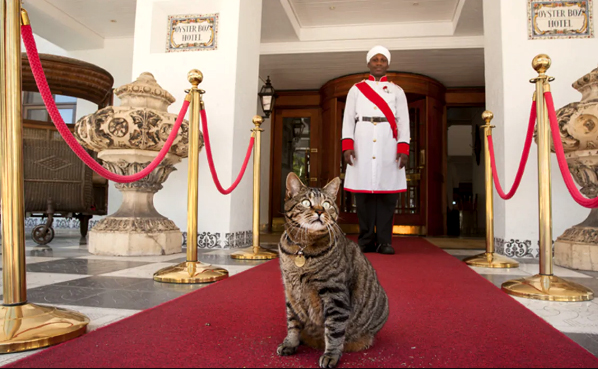 Resident Pets at Hotels and Lodges in South Africa