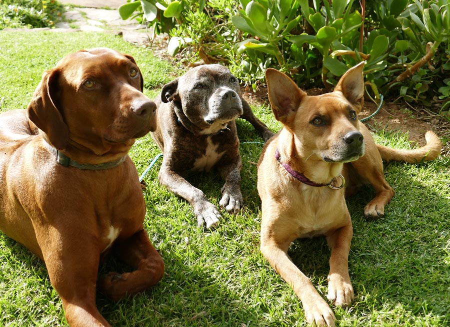 hotels and lodges south africa with special pets
