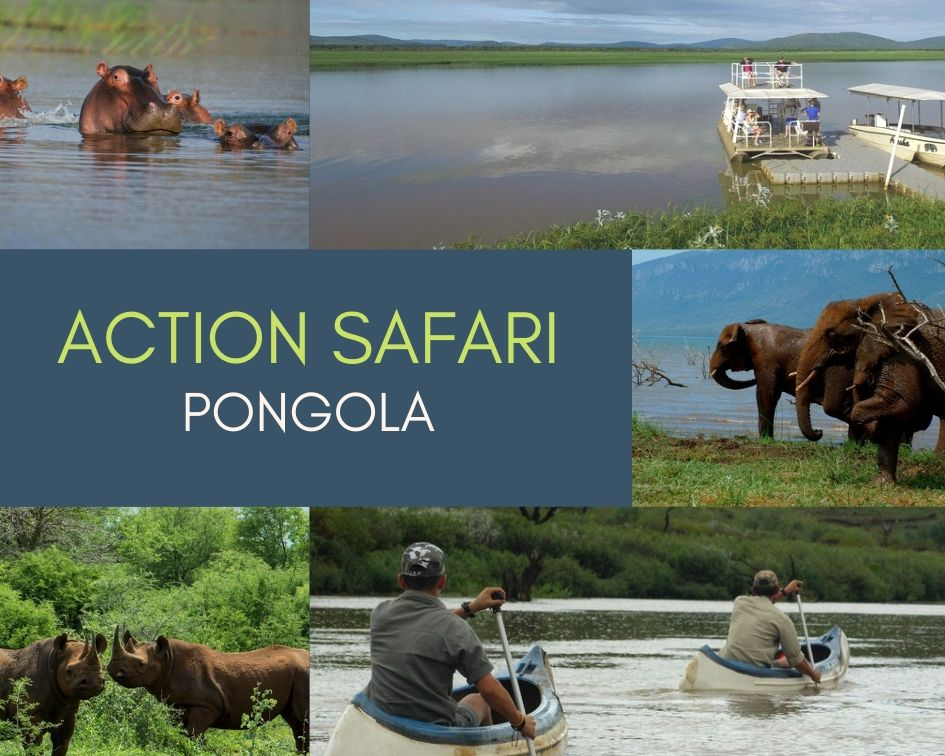 Your Action Safari in Pongola: Activity Lineup at White Elephant Safari Lodge