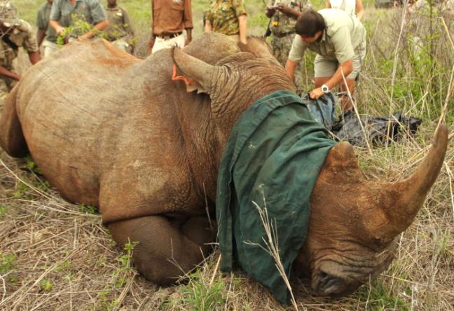 conservation safaris kwazulu natal south africa
